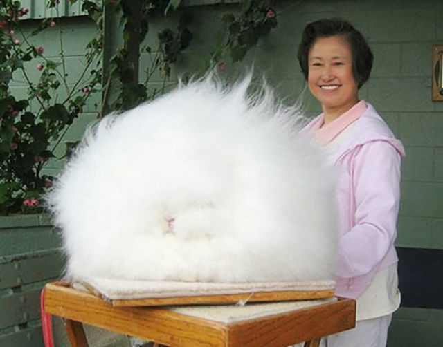23.) The world's fluffiest bunny