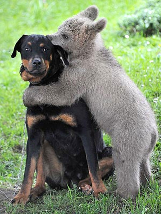 2) Dogs don't enjoy being hugged as much as humans and primates do. Canines interpret putting a limb over another animal as a sign of dominance.