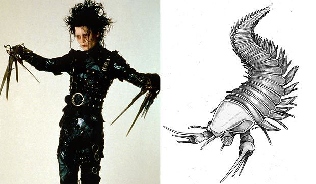 Johnny Depp has a 500 million year old fossil named  after him because its lobster claws resemble those of Edward Scissorhands.